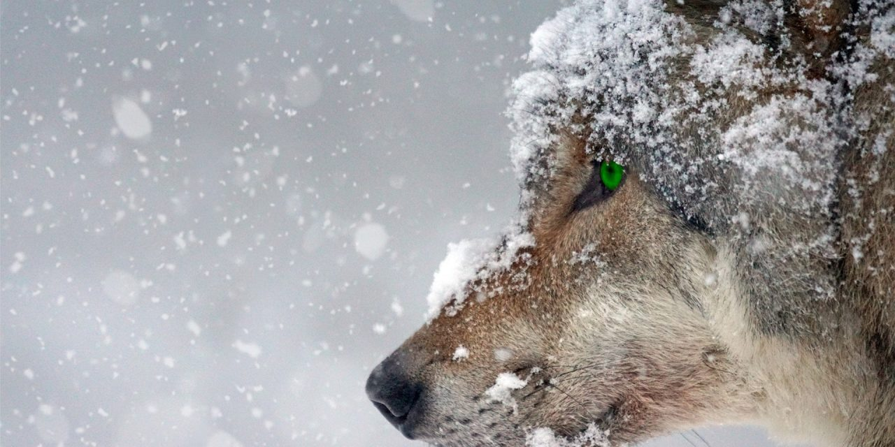 Bears, Bulls, Whales, Wolves & Sheep; The Animalogy of Crypto
