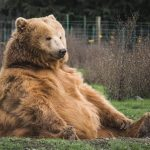 Historic lessons: biggest bears that have hug-trapped Bitcoin in the past